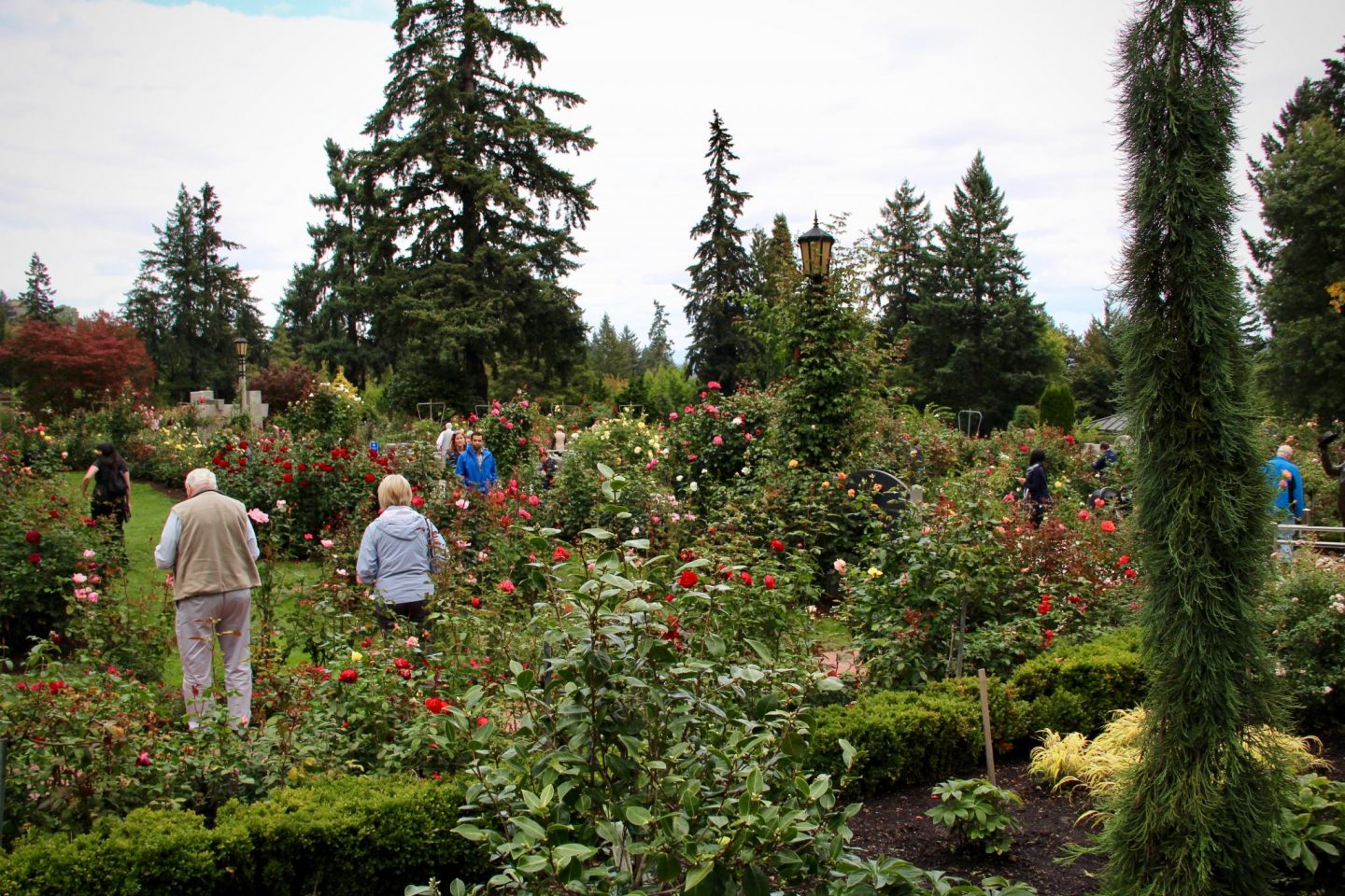 International Rose Garden Portland, Oregon - The Spectacular Adventurer