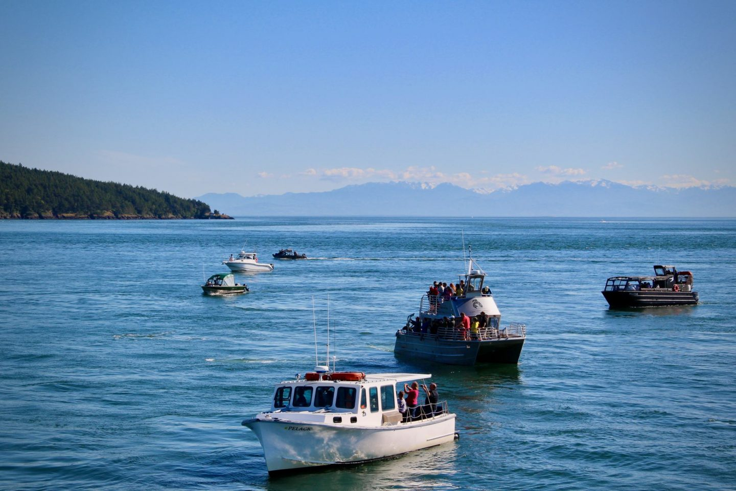 Whale watching boats near San Juan Islands, Washington | The Spectacular Adventurer