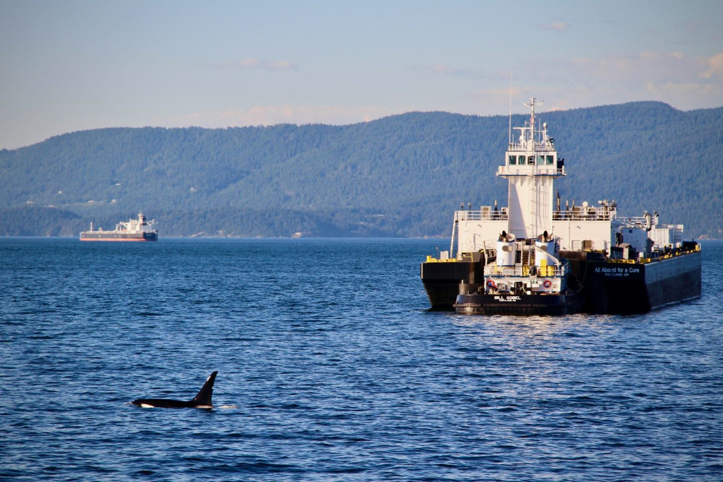 Orca whale watching San Juan-Islands Washington | The Spectacular Adventurer