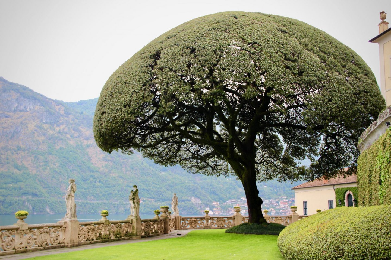 What to do in Lake Como ... Villa del Balbianello Tree, Lake Como Italy ... The Spectacular Adventurer