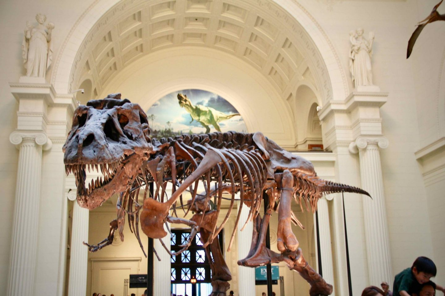 Chicago Field Museum | 3 day Chicago Itinerary | The Spectacular Adventurer