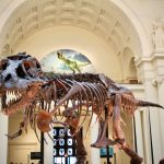 Field Museum Sue Dinosaur ... 3-Day Chicago Itinerary ... The Spectacular Adventurer
